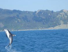 Kaikoura Whale Watch Tour