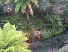 rotorua1 1000px 235x180 - Wolfgang Reviews South to North NZ