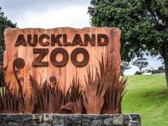 auckland zoo 240x180 - Auckland Zoo