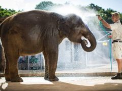 elephant 240x180 - Auckland Zoo
