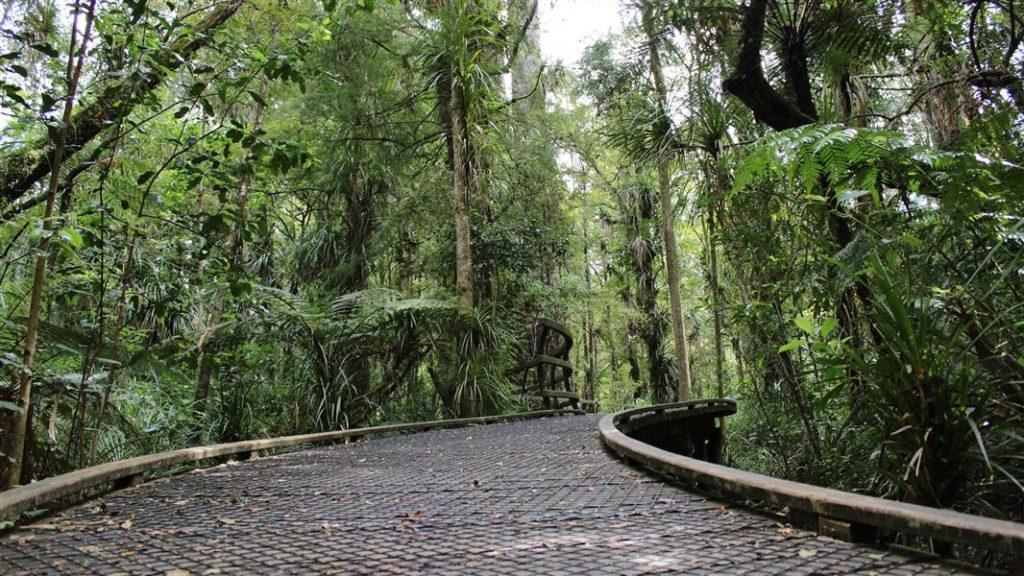 puketi nature trail2 1920 1024x576 - Puketi Nature Trail