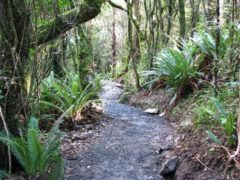 filename walking track 240x180 - Orokonui Ecosanctuary