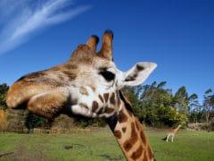 9567697328 48accfe201 o 1 240x180 - Orana Wildlife Park