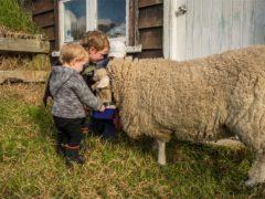 Farmstay 08 240x180 - Te Horo Farmstay