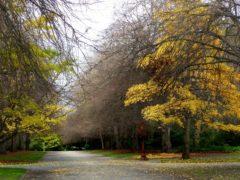 Path 1 240x180 - Hagley Park