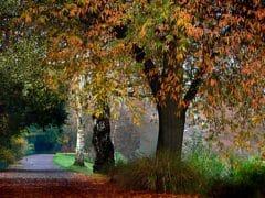 Trees 2 240x180 - Hagley Park