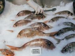 close up of fish 240x180 - Riverside Markets