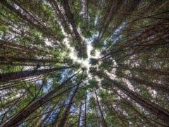 15234539654 2a164cbcf9 o 240x180 - The Redwoods (Whakarewarewa Forest)