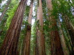 3870525627 3a1d84ecfa o 240x180 - The Redwoods (Whakarewarewa Forest)