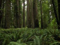 3870528775 fb61b67e24 o 240x180 - The Redwoods (Whakarewarewa Forest)