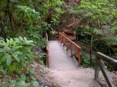 3871293062 fd32ac174c o 240x180 - The Redwoods (Whakarewarewa Forest)