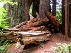 3871299428 362b5bb515 o 240x180 - The Redwoods (Whakarewarewa Forest)