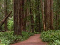 3871310624 ce6803b2dc o 240x180 - The Redwoods (Whakarewarewa Forest)