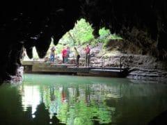 44175095770 76ed9a10a4 o 240x180 - Waitomo Caves