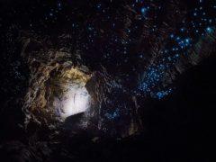 800px Waitomo Cave 1 240x180 - Waitomo Caves