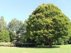 IMG 7732 240x180 - Hamilton Gardens