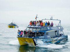 Whale Watch Vessels Pax  ResizedImageWzg5Myw1NjNd 240x180 - Whale Watching Kaikoura