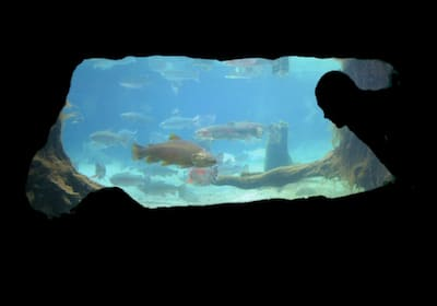 trout underwater viewing - Paradise Valley Springs