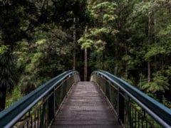 Falls 02 240x180 - Whangarei Falls